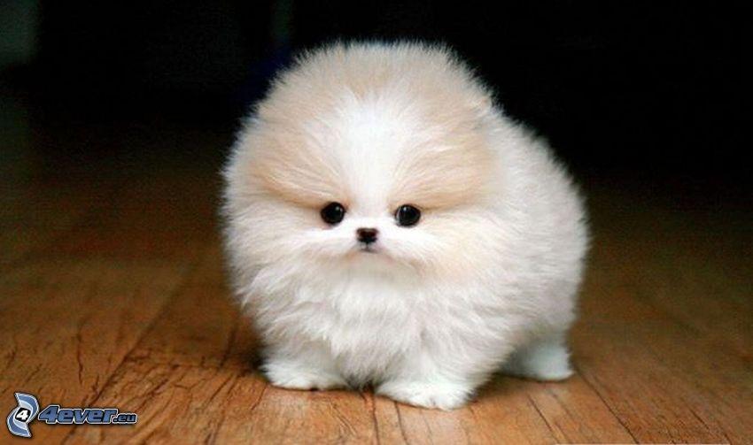 Perrito blanco