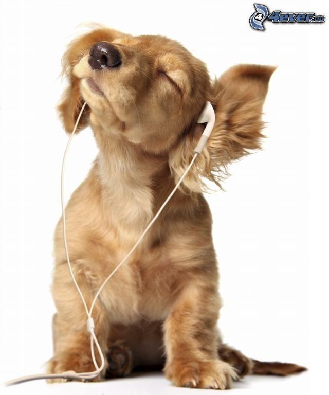 perro, auriculares, mp3, música, DJ