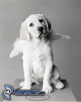 perro, cachorro, alas