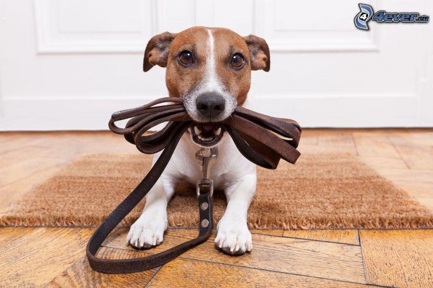perro, cuerda