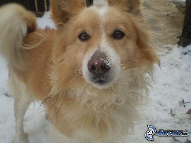 perro, invierno, nieve