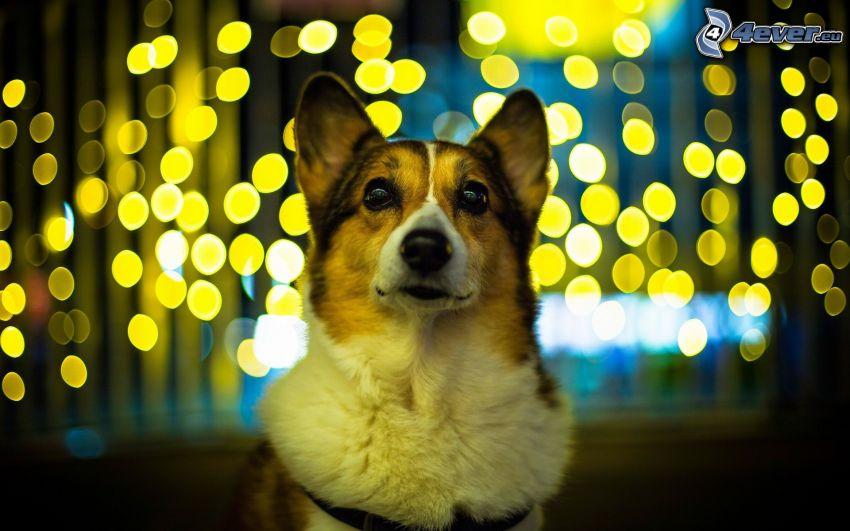 perro, luces
