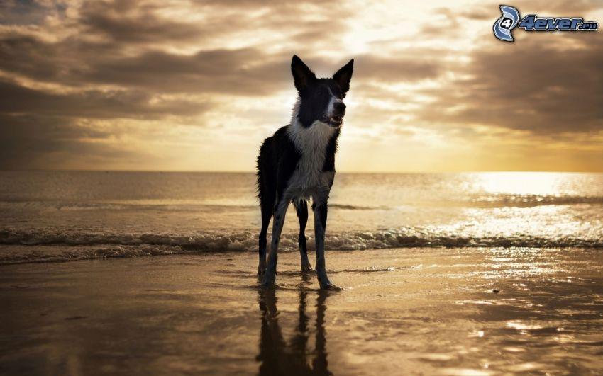 perro, mar