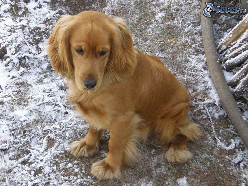perro, nieve