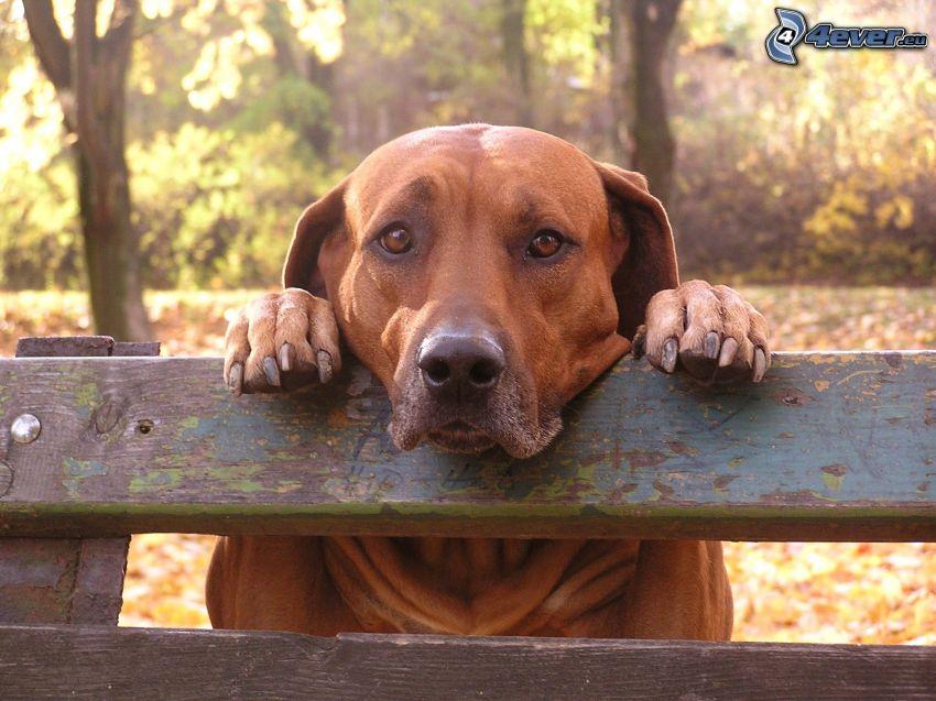 perro, tristeza, banco