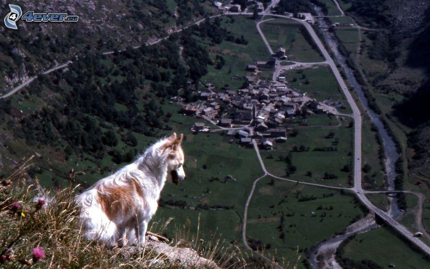 perro, vista, pueblo en el valle, montañas