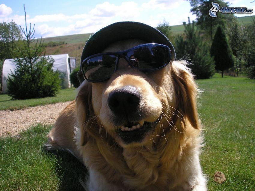 perro con gafas, gorro