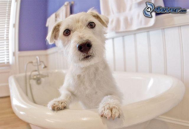 perro en la bañera