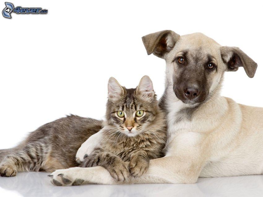 Perro y gato, amistad