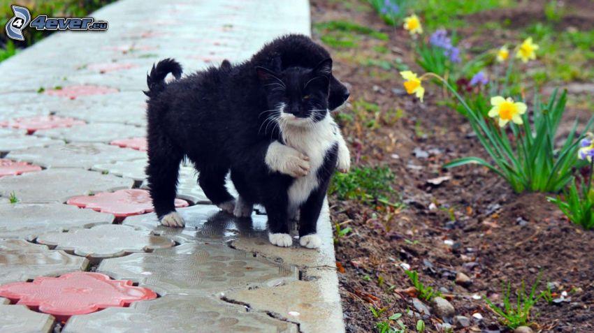 Perro y gato, cachorro, gato blanco y negro, cachorro negro, acera, narcisos, abrazar