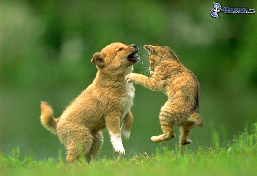 Perro y gato, hierba