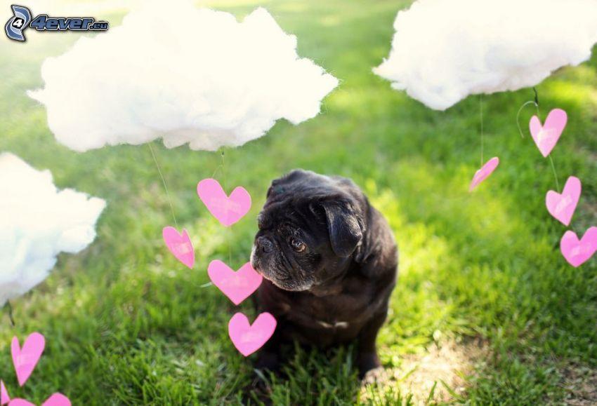 pug, corazones rosados, nubes