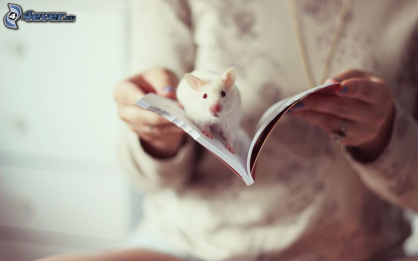 rata, libro, manos