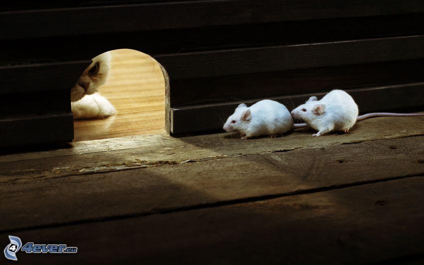 ratones, agujero, gato