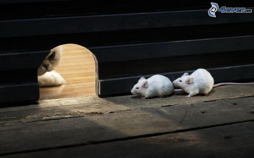 ratones, pared, agujero, gato, hocico, cobertura de madera