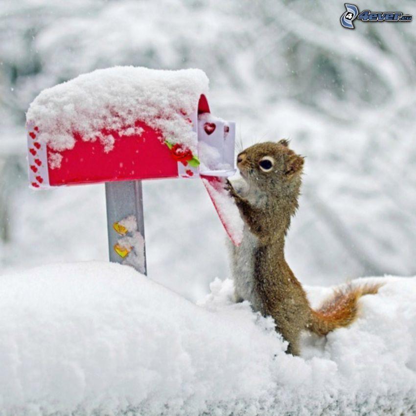 ardilla, correo, caja, nieve