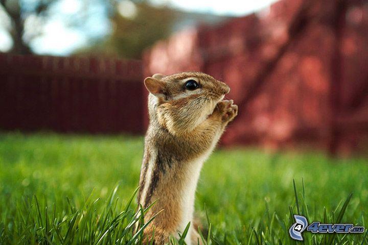 ardilla en la hierba