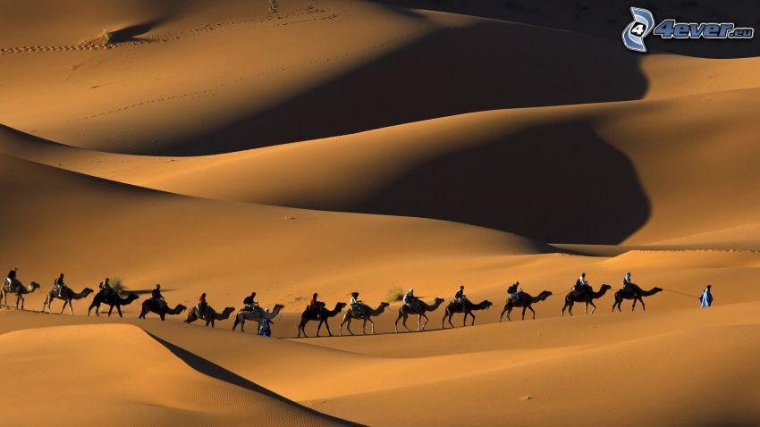 beduinos en camello, personas, camellos, desierto, arena