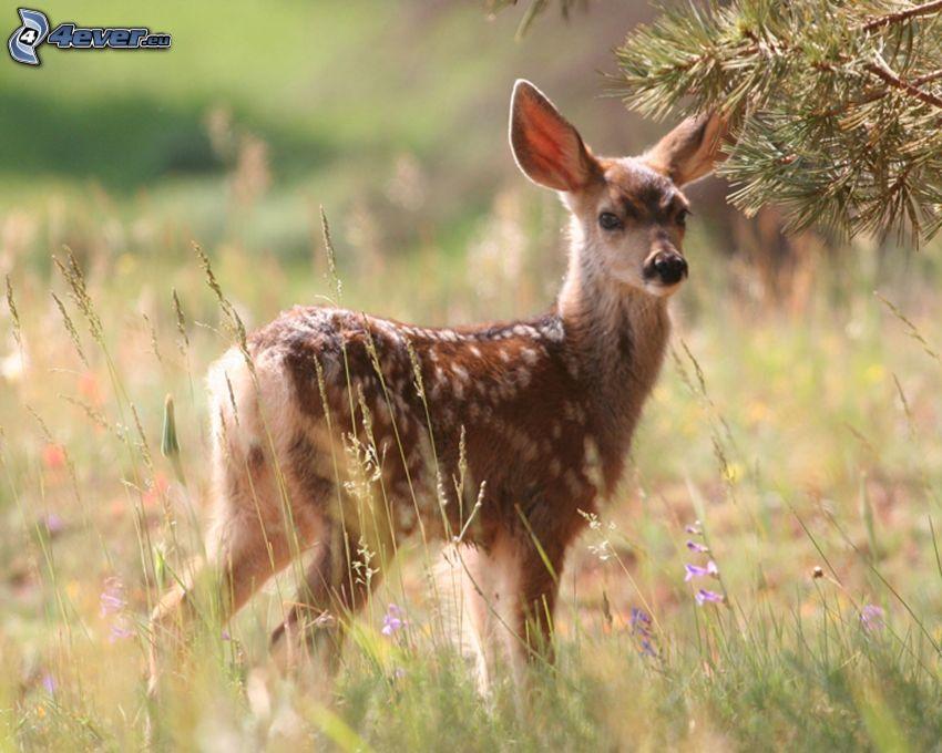 cachorros de ciervo, paja de hierba