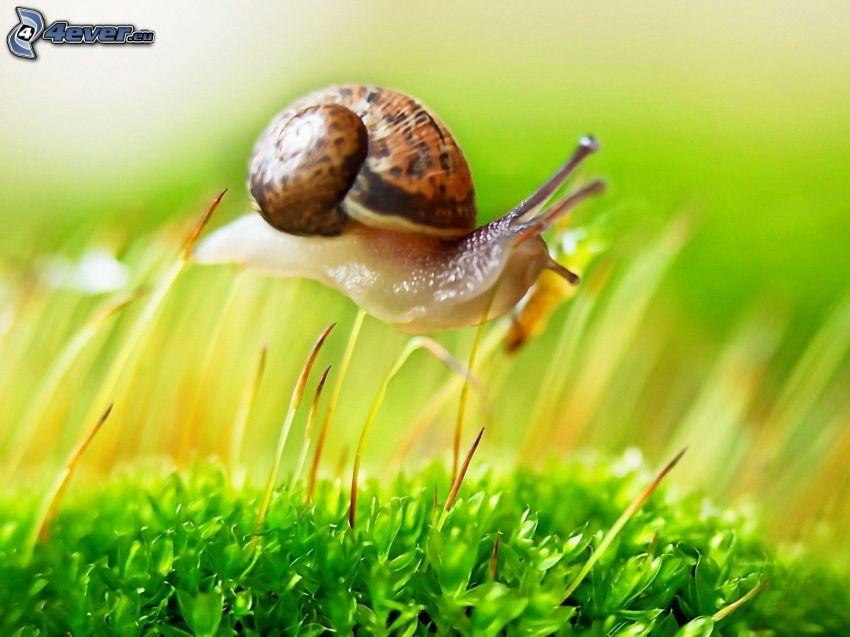caracol, paja de hierba