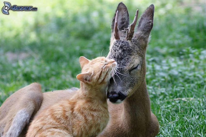 ciervo, gatito marrón