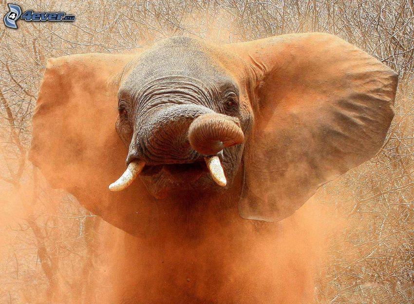 elefante, tronco, polvo