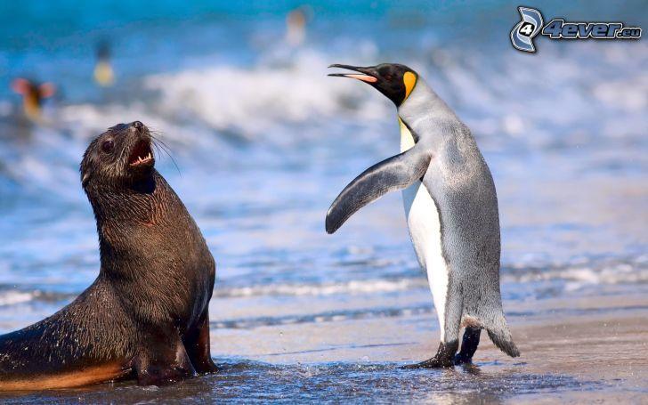 foca, pingüino