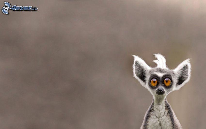 lémur, ojos grandes
