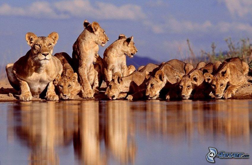 leonesas, lago