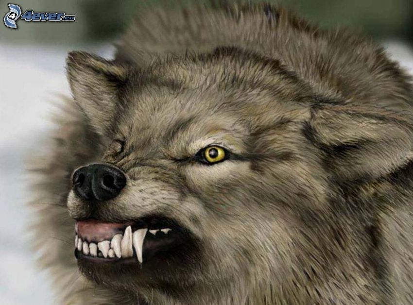 lobo, dientes, ira