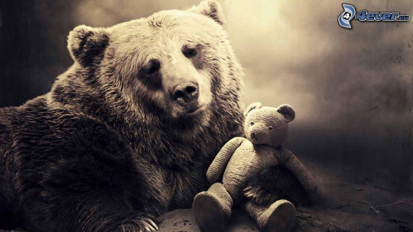 oso pardo, oso de peluche, sepia