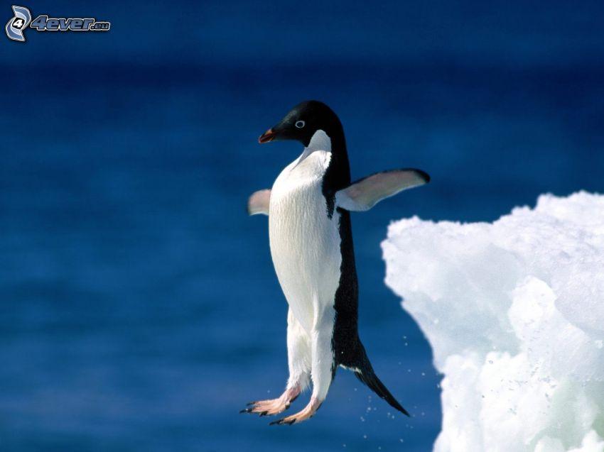 pingüino, salto, glaciar