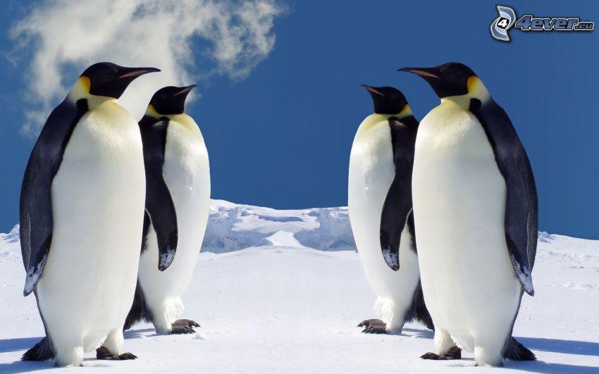 pingüinos, Antártida, invierno, nieve