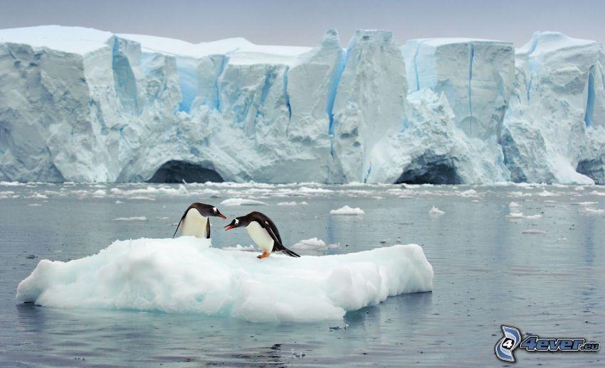pingüinos, témpano de hielo, glaciares, Océano Ártico
