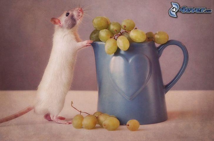 ratón, uvas, taza