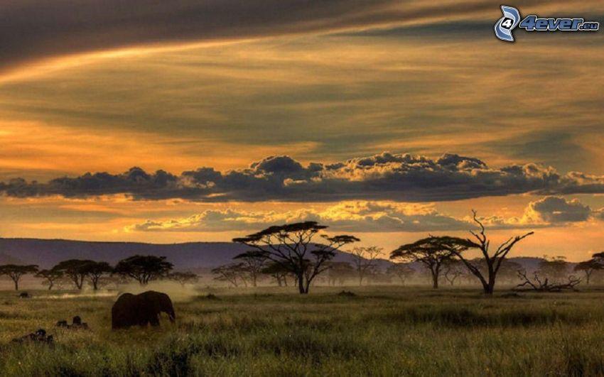 Safari, elefante, después de la puesta del sol
