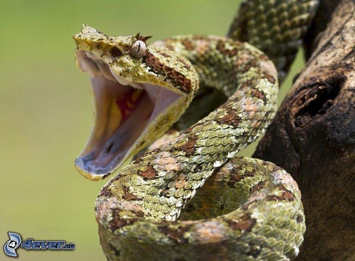 serpiente, morro