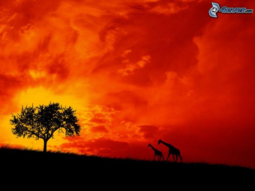 siluetas de jirafas, árbol solitario, cielo rojo