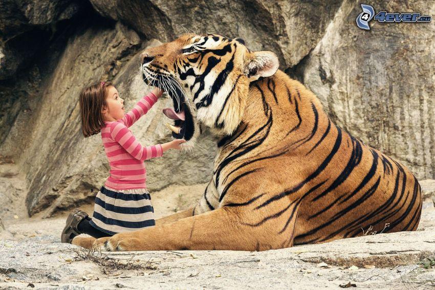 tigre, chica, morro