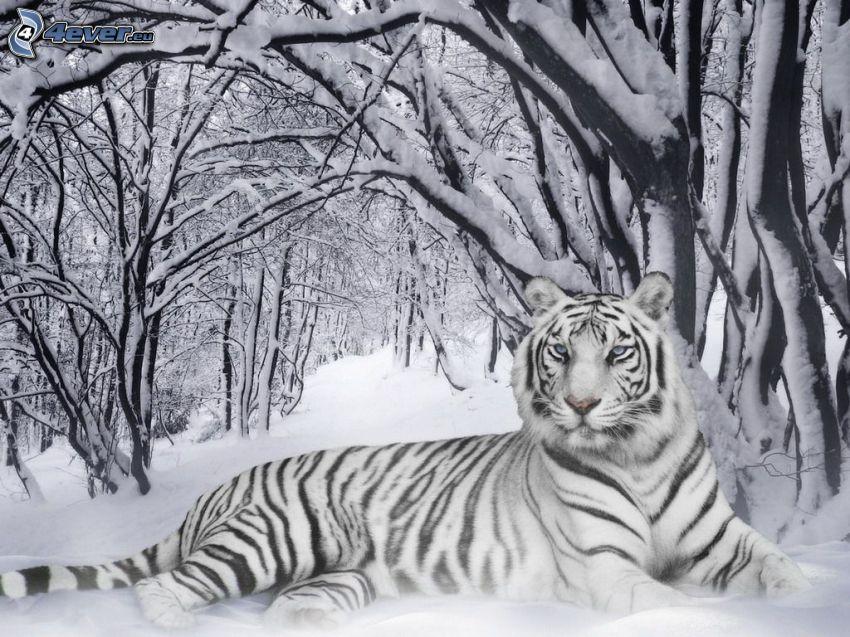 tigre blanco, nieve, árboles nevados