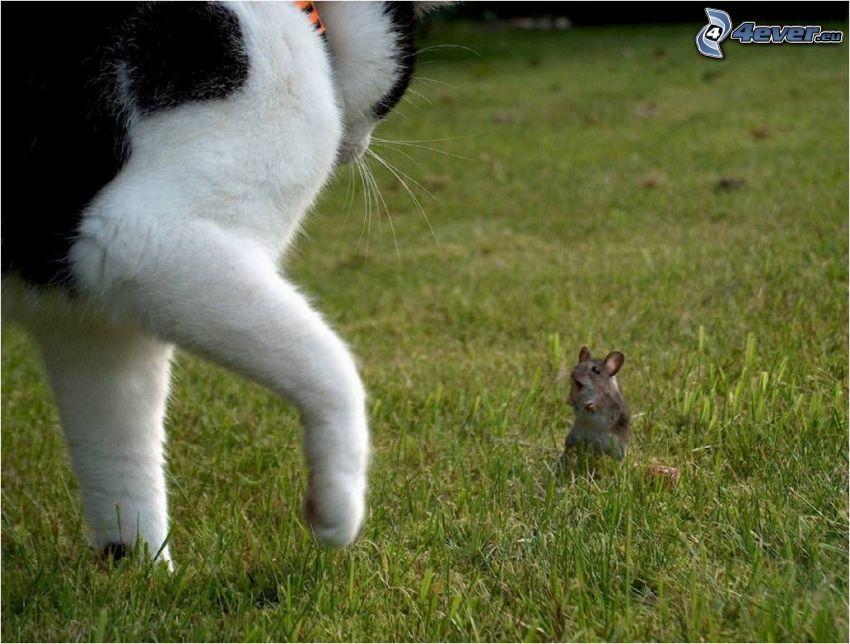 sorpresa desagradable, gato y el ratón, césped