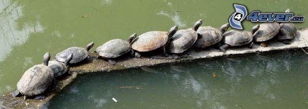 tortuga marina, lago