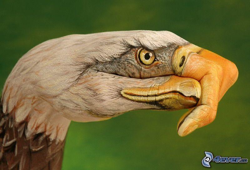 águila, mano, bodypainting