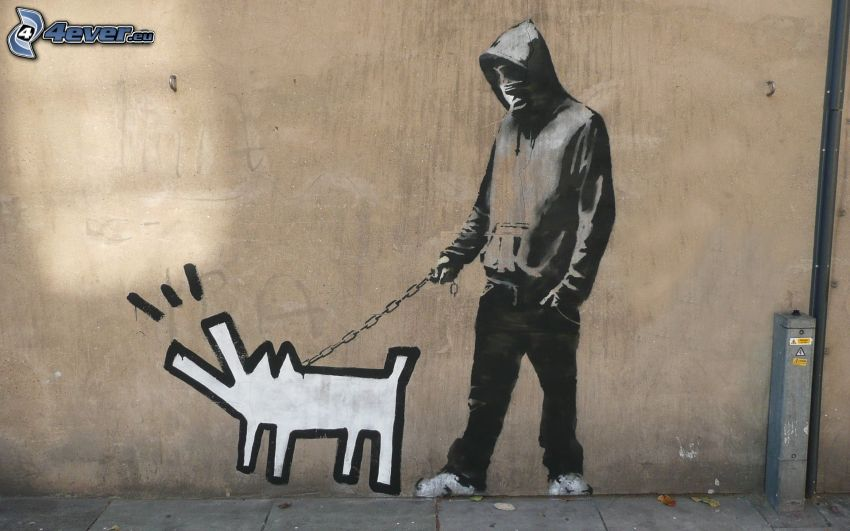 grafiti, muchacho, perro
