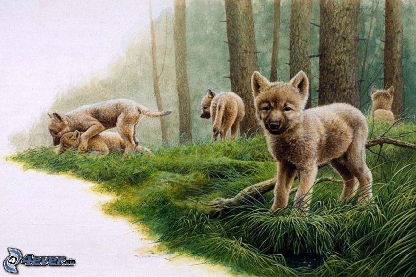 lobos jóvenes, cachorros, crías, bosque, juego
