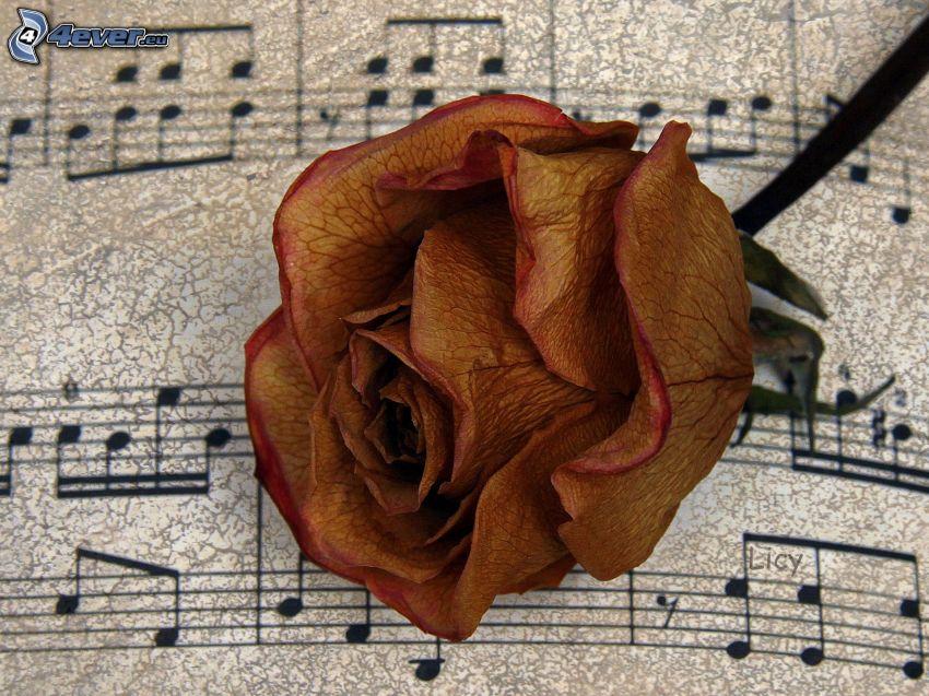 rosa, notas de música