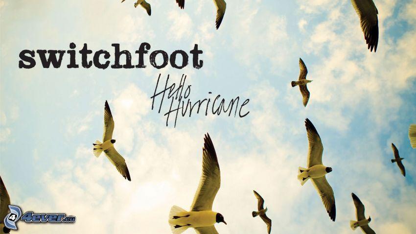 switchfoot - Hello Hurricane, gaviotas