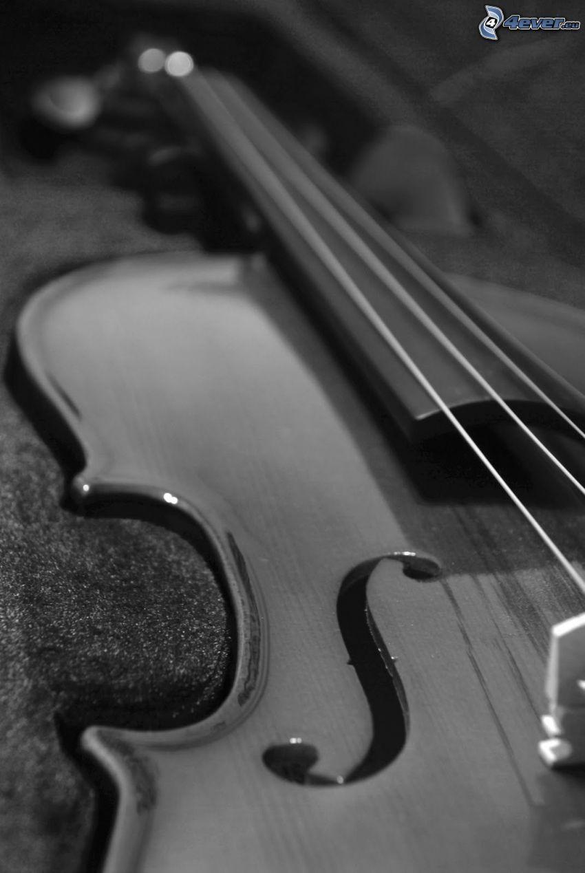 violín, Foto en blanco y negro