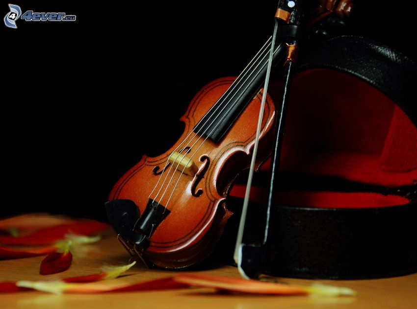 violín, pétalos de rosa