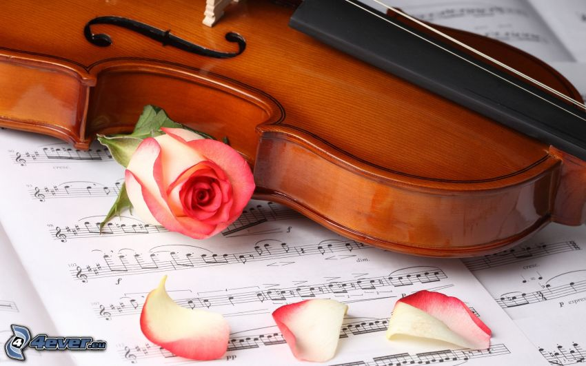 violín, rosa, notas de música, pétalos de rosa